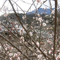 早春の名松線