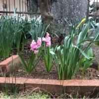 我が家の冬と春
