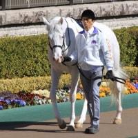 東京競馬 5R 新馬 2017 2/19(日)
