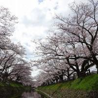 富山 白エビ旅行