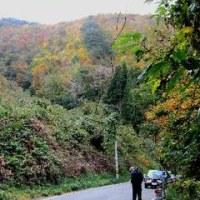 今年の紅葉狩りは途中で柔道観戦へ