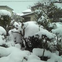 冬ごもり?
