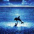 イルカと海と福田朋夏さん
