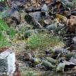 鉱泉を飲むアオバト