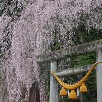 奥飛騨へのドライブ 4