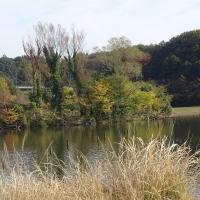 「21世紀の森と広場」平日探鳥会2016.11.17_木