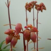 冬・二十四節気・大寒に咲く元気な花たち