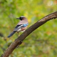 10月22日 原村の野鳥