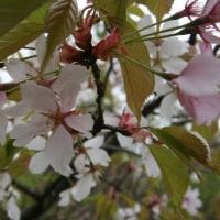 春の富幕山(浜松市北区)