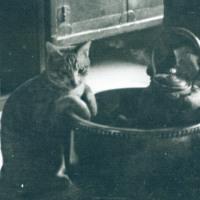 火鉢にあたるネコ
