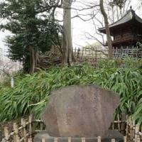 市川弘法寺の伏姫桜と真間の手児奈堂を訪ねて