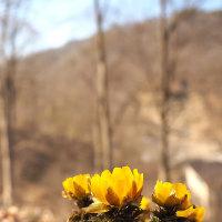 ★けやきの森の中で春が始まる