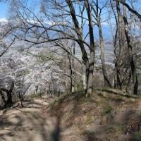 光城山の桜と北アルプス風景 (安曇野市)