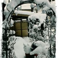 すごい積雪量。