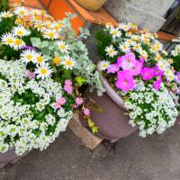 お花の代償