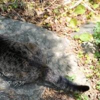 猫のウエルカムボード