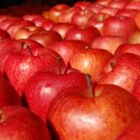 アップル・林檎(リンゴ)のフリー素材 | 商用利用可能