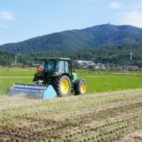 ストローチョッパーで稲株の処理をしています。
