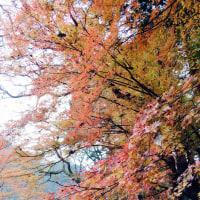 香嵐渓🍁落葉w