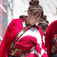神戸よさこいまつり2016  神戸大学よさこいチーム山美鼓