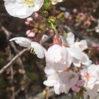 MRI検査結果と開花宣言
