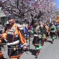 「白井宿八重ざくら祭り」で世界遺産広報活動