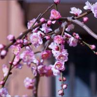 春の香り!