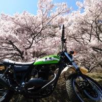 萌える・・・桜か。