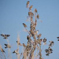 170103_小鍋島-1 <田計里 以外の鳥>
