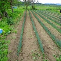 小田道A圃場の草掻き