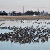 白鳥の郷(千葉県印西市)