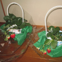 イチゴ苗のプレゼント