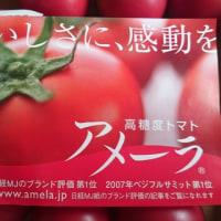 高糖度トマト「アメーラ」
