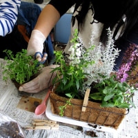 季節のお花の寄せ植え教室 ◇ 燕市立燕中学校文化教養部 ◇