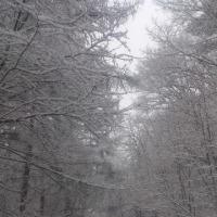 蓼科山荘より 再び降雪