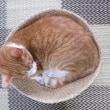 猫ベッドはIKEAのバスケット