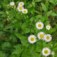 朝の黄色い太陽。小さい白花。