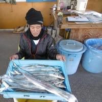 12月3日タチウオ釣果