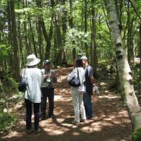 富士の旅-3「青木ヶ原の木漏れ日の下」