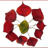 赤い落ち葉