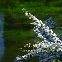 安曇野の桜旅(番外編)