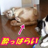 マタタビに酔った♂猫だいずがおもしろ過ぎ!
