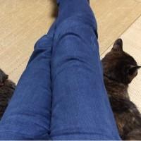 出張中の猫たち