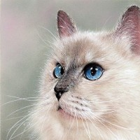 青の瞳 Ⅳ