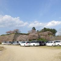 濠の周りには約1000本の桜@丹波篠山城跡