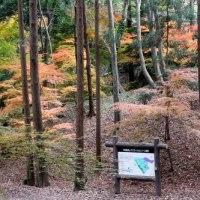 たそがれ俳諧人には、秋の詩情は道野辺の光景