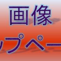 大仙公園のカンヒザクラ・寒緋桜とメジロ(2017年3月22日)