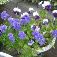 我が家の花達(6月P2)