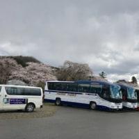 角館 桜満喫の旅 その3