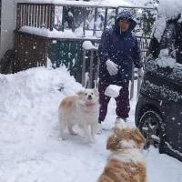 一日⛄・・・雪